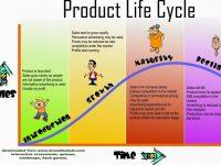 Siklus Hidup Produk: Pengertian, Tahapan, dan Contoh Kasus
